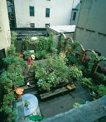 rooftop refuge in the asphalt jungle vegetable gardener