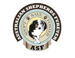 double j australian shepherds australian shepherds furever corporation nonprofit in rancho