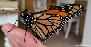 healing broken wings cancer survivor and butterfly form beautiful