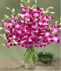 flowers to india orchids to india gift orchids to india online