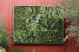 Best Plants For Vertical Garden - the best plants to grow in your sydney vertical garden point