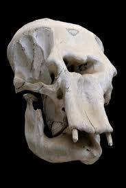 skull waterfall jack the giant slayer yahoo image search results 8 best skulls images on pinterest animal skulls skull anatomy