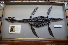 fossil mounts extinct monsters
