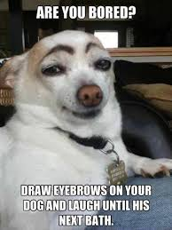 Funny Meme Dog - dog meme are you bored