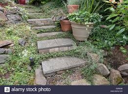 cement stone steps with groundcover potted plants rocks bricks
