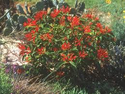 gardenia hgtv