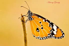 what does a butterfly say at the end of the day becoming agile