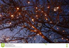 tree with ferry lights stock photo image 71176615