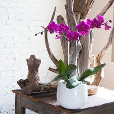 orchid arrangements orchid arrangement novelty white with pink orchids orchid