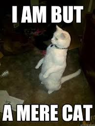 Mere Cat Meme - i am but a mere cat mr mustard quickmeme