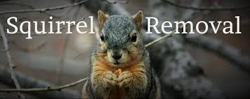 how to get rid of squirrels in michigan tips