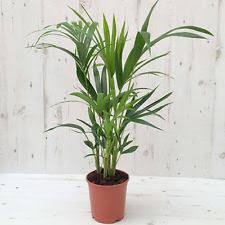 Small Desk Plants by Small Desk House Plants Ebay