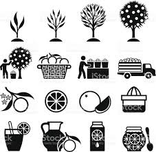 oranges clipart black and white orange tree growing and organic farming black white icons stock