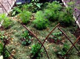 natural mulch for vegetable garden ideas beautiful landscaping