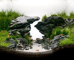 Aquascape Environmental Best 25 Aquascaping Ideas On Pinterest Aquarium Aquarium Ideas