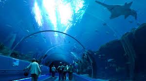 Georgia Aquarium Floor Plan Things To Do In Atlanta Ga W Atlanta Downtown