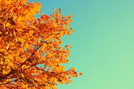 file complimentary autumn colors aqua and orange creative commons