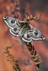 best 25 small moths ideas on pinterest