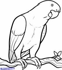 coloring pages excellent parrot drawing simple draw