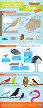 infographic mother nature u0027s pop science guide to birds bird