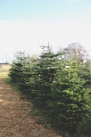 asack and son christmas tree farm nature u0027s beauty pinterest