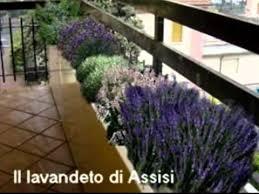 come realizzare un giardino pensile come creare un giardino in terrazzo fai da te mania