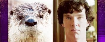 Benedict Cumberbatch Otter Meme - benedict cumberbatch otter meme 28 images pinterest the world s