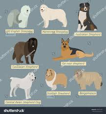 simple silhouettes dogs types sheepdogs flat stock vector