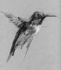 the daily sketch duane eells humming bird charcoal and white