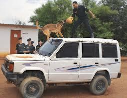 belgian shepherd how to train beware of the dog squad u0027 how belgian malinois spark fear among