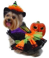Halloween Pet Costume Dog Boutique Store Halloween Dog Costumes Customized Dog Collars