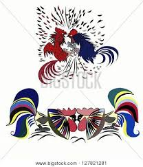fighting rooster images illustrations vectors fighting rooster