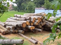 file gelugu coconut wood in klaten java jpg wikimedia commons