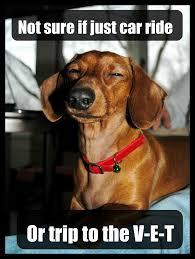 Weiner Dog Meme - fresh 27 weiner dog meme wallpaper site wallpaper site
