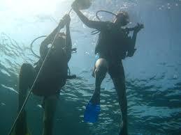 padi open water diver level certification sail fish scuba