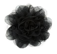 black flower black flower from lace on white background stock photo