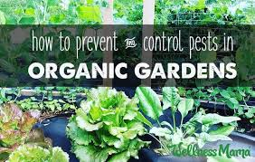 garden pest control u0026 prevention natural options wellness mama