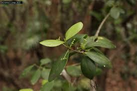 florida keys native plants regional conservation