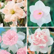 Pretty Types Of Flowers - 365 best flowers and plants by name images on pinterest flowers