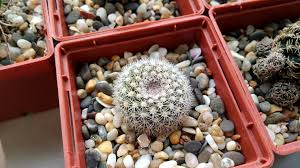 succulent house free images cactus food green collection produce succulent