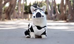 stormtrooper corgi halloween video time com