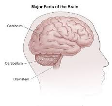 Anatomy Of The Brain And Functions How The Brain Works Johns Hopkins Comprehensive Brain Tumor Center