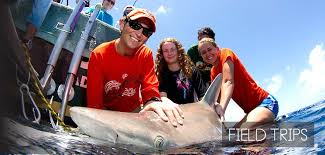 trips for high school graduates student field trips shark research conservation program src