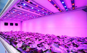 grow room lighting requirements grow lights explained here s what you re doing that s wrong off