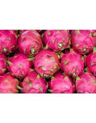 buy fruit online buy online fruit plant online in india chhajedgarden