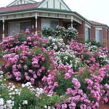 98 best flower carpet in gardens images on pinterest carpet