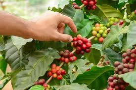 guia de la universidad veracruzana 2017 crea uv la guía del café