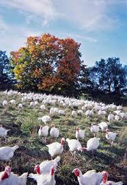 order a free range pasture raised certified organic thanksgiving