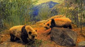 bear rocks mountans bamboo china landscape pictures images bears