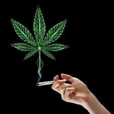 smoking weed in backyard backyard pot smoking threatens to come between neighbours the star